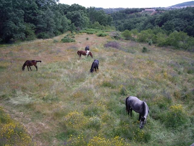 Naturaleza desde el alojamiento nº 1, los caballos de La Vera