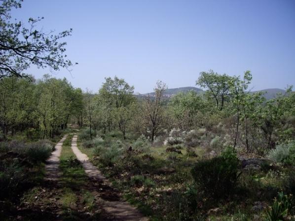 Camino a la casa rural (13) (640x480)