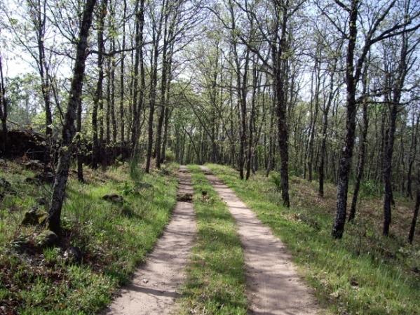 Camino a la casa rural (2) (640x480)