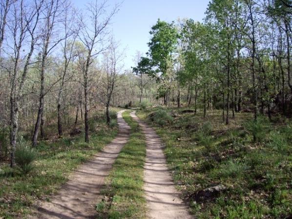 Camino a la casa rural (3) (640x480)