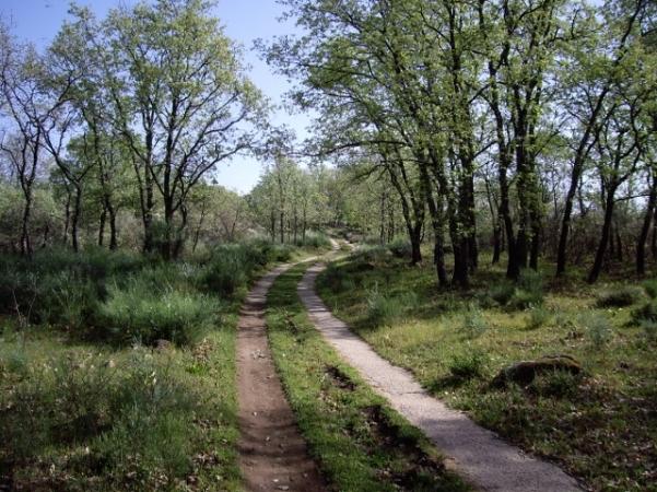 Camino a la casa rural (4) (640x480)
