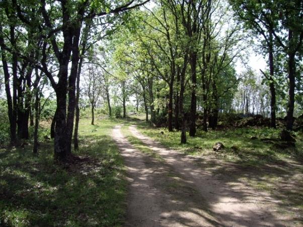 Camino a la casa rural (6) (640x480)