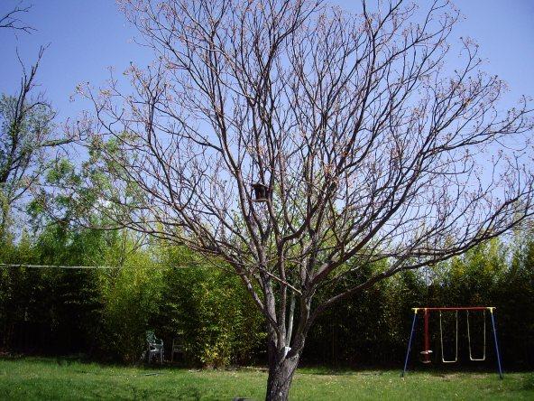 Nidales para pájaros (2)