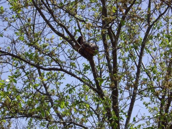 Nidales para pájaros (5)
